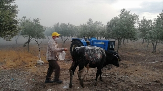 Manisa'da çiftlikte çıkan yangın 3 saatte söndürüldü