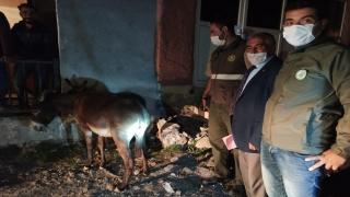 Kars'ta yavru eşeğe eziyet ettikleri ileri sürülen iki kişiye para cezası kesildi