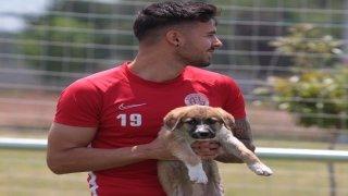 Antalyaspor Kulübü, sokağa terk edilen iki köpek yavrusunu sahiplendi