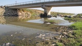 Hatay'da balık ölümleri yaşanan derede inceleme başlatıldı