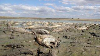 Oksijensiz kalan binlerce balık telef oldu