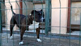 """Sivas'ta """"tehlikeli ırk"""" köpek besleyen kişiye 9 bin 563 lira ceza"""
