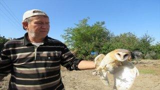 Tedavi ettirdiği yaralı baykuşa iyileşinceye kadar evinde bakacak