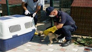 Adana'da terk edilmiş köpek yavrularına jandarma sahip çıktı