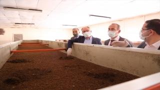 Sivas'ta çevreye ve ekonomiye katkı sağlayan tesiste 100 ton solucan gübresi üretildi