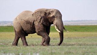 Nesli tükenme tehlikesinde olan fillere isim verilecek