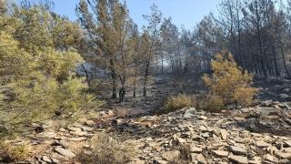 Bodrum'da ormanlık alanda çıkan yangın kontrol altına alındı