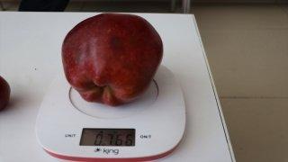 Bu Elma Tam 766 gram