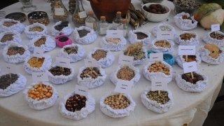 Artvin'de yerel tohumlar halk pazarında vatandaşlar buluştu